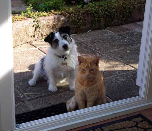 jack russell and cats