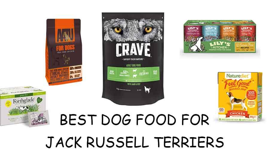 Best jack russell food